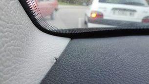 El mosquit tigre troba molts espais en els cotxes