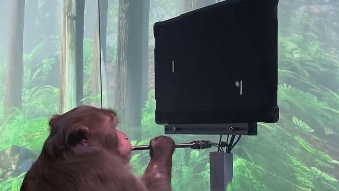 Un mico amb xips cerebrals que juga a videojocs: un pas per moure objectes amb la ment