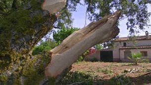 Tornado a l'Anoia, entre Santa Maria de Miralles i la Llacuna