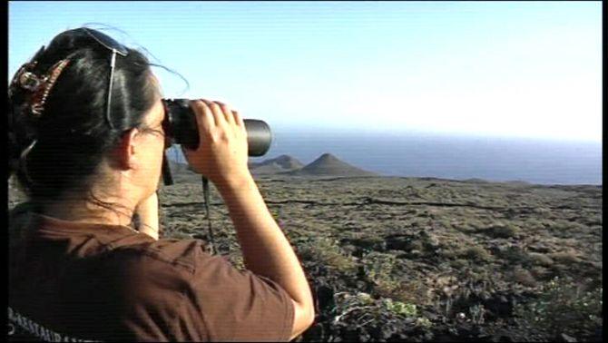 Emergeixen a la superfície del mar taques verdes de sofre a menys de 3 quilòmetres de l'illa d'El Hierro