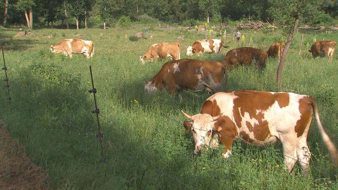 L'agricultura regenerativa, un aliat important per combatre el canvi climàtic