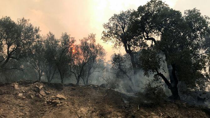 Des de dilluns, diversos incendis cremen al nord-est d'Algèria (Reuters/Abdelaziz Boumzar)