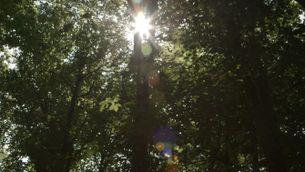 La química de l'aire sota la copa dels arbres als boscos beneficia el sistema immunitari