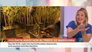 Violència associada al tràfic de marihuana