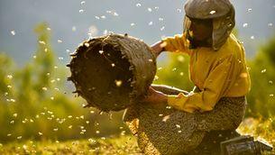 """El fràgil equilibri de la natura a """"La terra de la mel"""" (""""Honeyland"""")"""