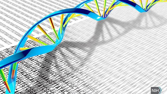 El genoma humà per primer cop al complet: desxifren la part que encara quedava oculta