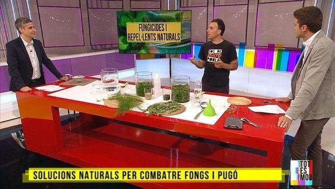 Com fer fungicides i repel·lents naturals a casa per combatre les plagues de les plantes
