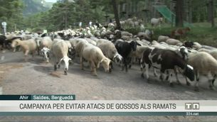 Els Agents Rurals inicien una campanya per evitar atacs de gossos als ramats