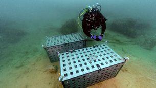 Submergeixen àmfores en aigües del Port de Tarragona com a mètode per envellir vins