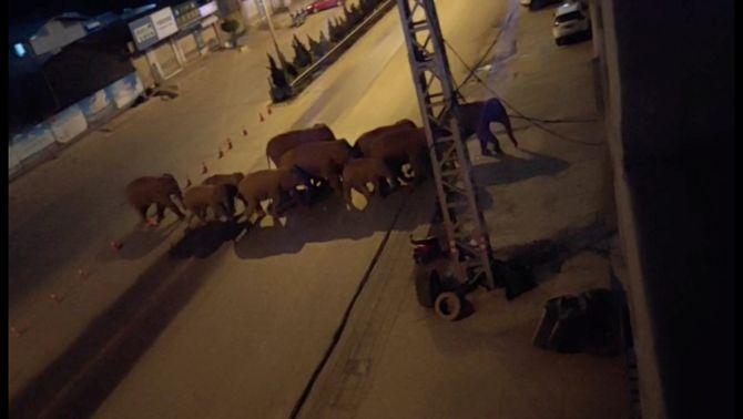 El misteriós viatge de 15 elefants deixa un rastre de destrucció a la Xina