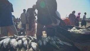 El Senegal, un país forçat a la fugida