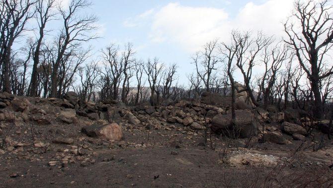 Condemnen Endesa a pagar 37,5 milions d'euros als propietaris forestals afectats pel gran incendi del Berguedà del 1994