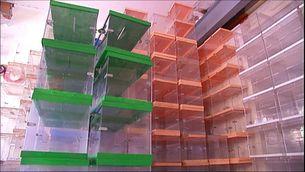 La Fiscalia ordena a les policies locals que no deixin sortir urnes dels ajuntaments