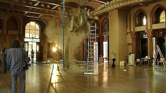 Es trenca l'esquelet de balena del Museu de Ciències Naturals de Barcelona