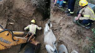 Els bombers han hagut de fer servir una excavadora per poder alliberar l'euga