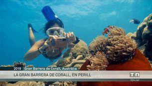 Disputa entre Austràlia i la Unesco per l'estat de Gran Barrera de Corall
