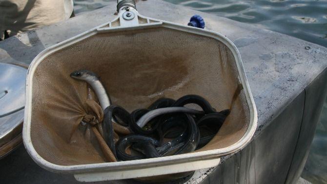 Un viatge per la cuina marinera de l'albufera i de les costes tarragonines