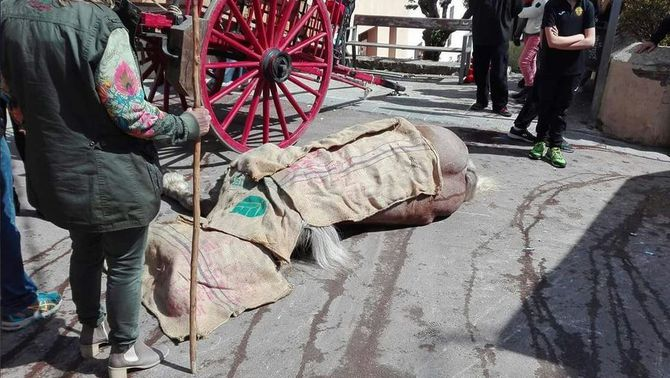 Denunciaran l'entitat Tres Tombs de Torrelles per la mort d'un cavall