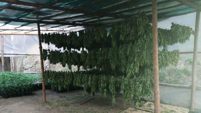 La zona on el grup que cultivava marihuana eixugava les plantes