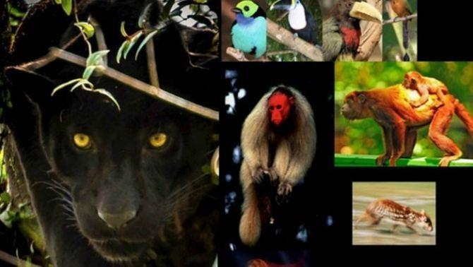 Brasil, Espanya i Austràlia s'uneixen per revolucionar la monitorització de la biodiversitat a l'Amazones