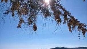 Diumenge, retorn del sol amb restes de ruixats
