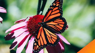 L'efecte papallona