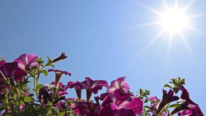 Dia tòrrid amb avís per calor i màximes de 40 ºC en un dia 100% estable