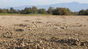 """La sequera posa en risc els aiguamolls de l'Empordà: """"Pot deixar de ser una zona humida"""""""