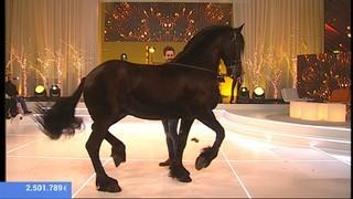 Imatge de:El cavall de La Marató