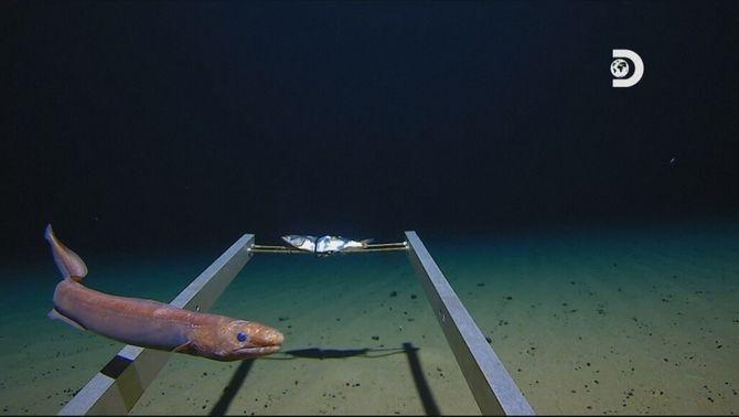 Bat el rècord d'immersió amb submarí i troba plàstic a la zona més profunda del planeta
