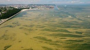 Bacteri a les platges bàltiques de Polònia