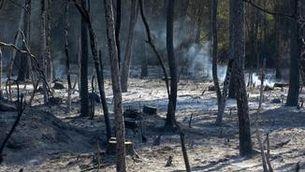 Arbres cremats a l'incendi de Ventalló