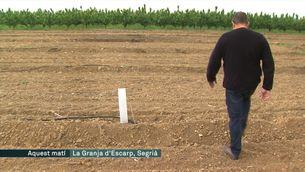 Roben 280 cirerers a un pagès de Lleida