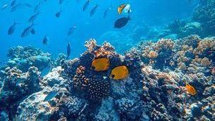 A la gran barrera australiana hi viuen 400 tipus de corall, 1.500 espècies de peixos i 4.000 varietats de mol·luscs