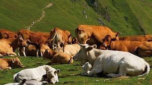 Vaques Aran