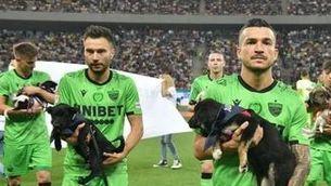 La Federació Romanesa de Futbol incentiva l'adopció de gossos abandonats