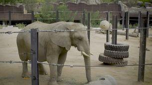 Susi, una elefanta a l'habitació