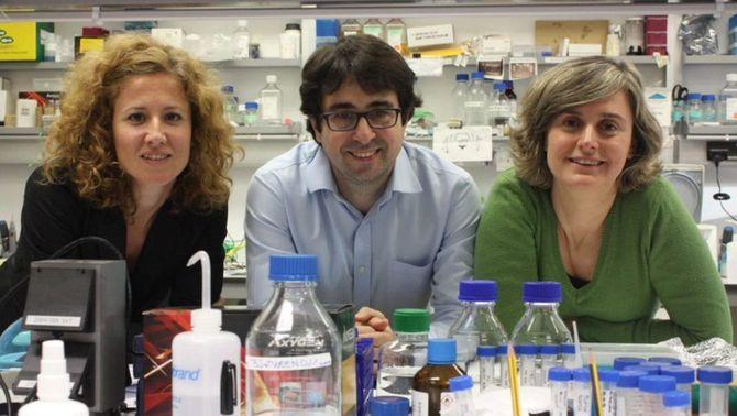 Un estudi amb participació de la UAB identifica grans diferències entre neurones amb receptors de dopamina