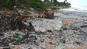 Desastre ecològic a les costes de Sri Lanka per l'incendi d'un vaixell mercant