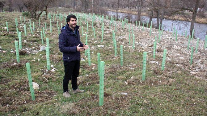 Un projecte europeu permet recuperar a la Cerdanya les condicions ecològiques d'un entorn on hi havia un bosc de ribera