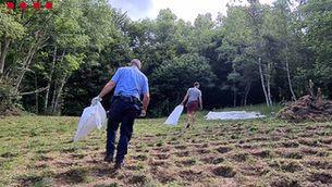 Quatre detinguts a Pardines per tenir 5.335 plantes de marihuana en una zona boscosa