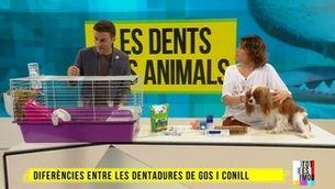 Mascotes: com rentar les dents al teu gos