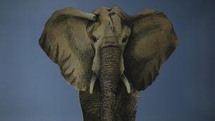 La història de l'elefanta Susi, símbol de la transformació dels zoològics