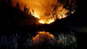 Un bosc en flames prop de Bouca (Reuters)