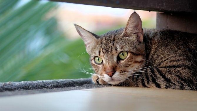 10 coses que pots aprendre del teu gat (i cap és fer meeeeeeu)