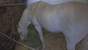 Un cavall tancat en un garatge