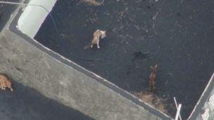 Primeres imatges dels gossos rescatats a La Palma, que es troben sans i estalvis