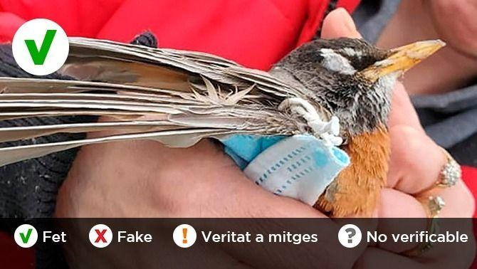 Cal tallar les gomes de les mascaretes per evitar danys als animals?