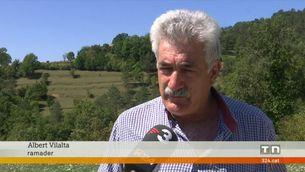 Multen un ramader del Ripollès amb 5.800 euros per la mort de 25 gripaus