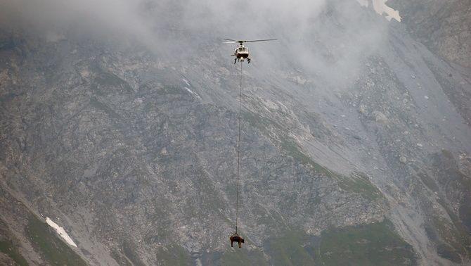 Les deixen a prop del pas de Klausen, a uns 1.950 metres d'altitud